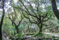 Δάσος Ράντη